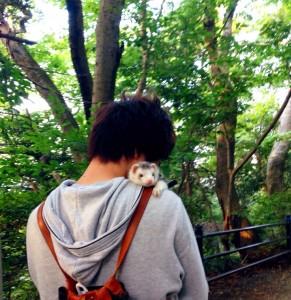 フェレット 散歩 ぷーすけ 高尾山