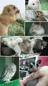 フェレット 小動物専門店
